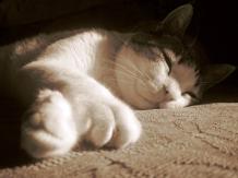 IMG_0262 kitty