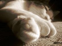 IMG_0263 kitty