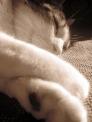 IMG_0266 kitty