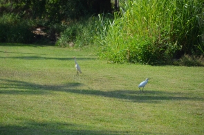 photo 2 Hawaii birds 1