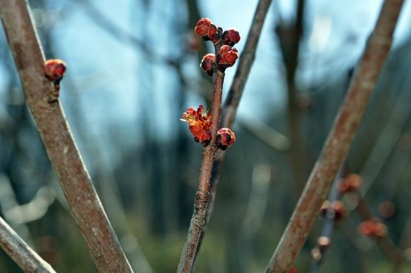 DSC_0846 spring