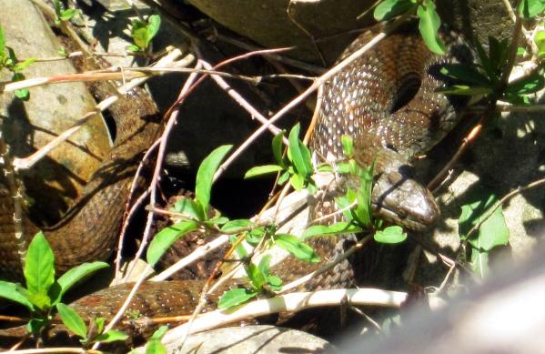 IMG_0583 snake