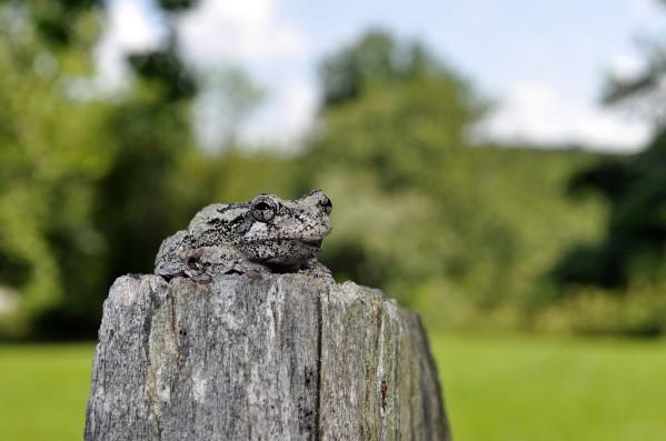 DSC_0007 frog