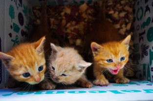 The first three kittens found...