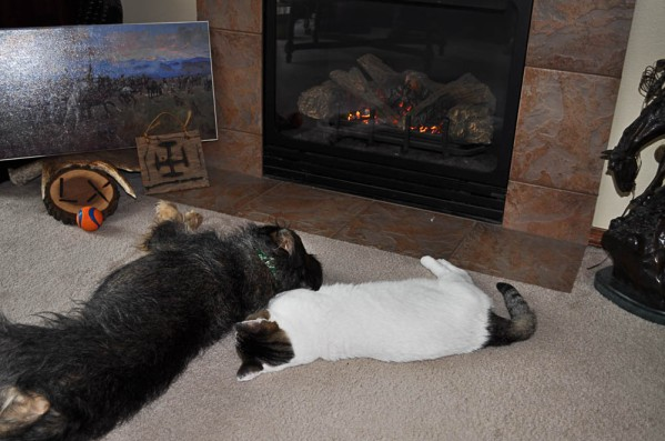 Charbie and Remi LOVING Jim and Mary Beth's fireplace!