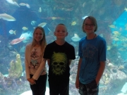 ABQ Aquarium