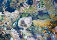 Tide pool finds