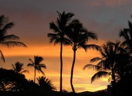 You can never take enough 'palm trees in the sunset' pictures!